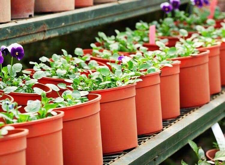 Why Plastic Pots Are Getting Replaced by Terracotta Pots in Garden